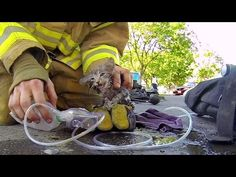 VIDEO: Fireman Cory Kalanick rescues an unconscious kitten from a burning house filled with smoke.