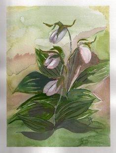 June 6, 2013 'Lady's Slippers' Jane Tims