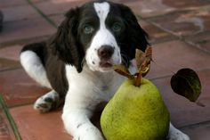 10 Best Fruits and Vegetables for Dogs