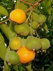 Resultado de imagen de exotic fruit