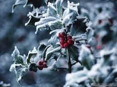 Holly - symbolizes the old solar year, the waning sun, protection, and good luck Old World Christmas, Christmas Scenes, Christmas Music, Winter Christmas, Christmas Berries, Country Christmas, Christmas Stuff, Christmas Ideas, Xmas