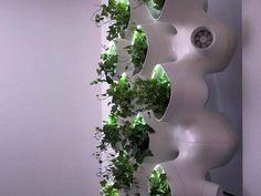 Uma parede ecológica enfeita o ambiente e limpa o ar