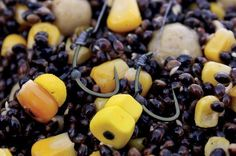 How to get the most out of maize and sweetcorn