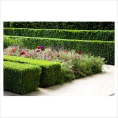GAP Photos - Garden & Plant Picture Library - Clipped box hedging with herbaceous planting - The Laurent-Perrier Garden, Sponsored by Champagne Laurent-Perrier - Gold medal winner at RHS Chelsea Flower Show 2009 - GAP Photos - Specialising in horticultural photography