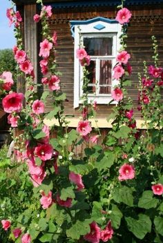 Windows and doors . Beautiful Gardens, Beautiful Flowers, Hollyhocks Flowers, Hydrangeas, Russian Architecture, Garden Cottage, Types Of Flowers, Windows And Doors, Garden Inspiration