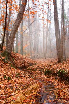 woodendreams:  (by jeffsmallwood)  A magic place to walk through leaves,  I can hear the crunch of leaves can't you?