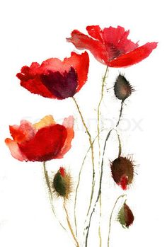 Image of 'Watercolor illustration of red poppy flower'