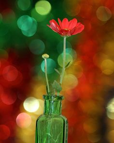 Green vase and red flower