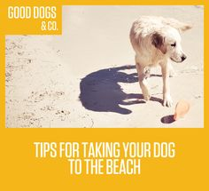 Taking your dog to the beach for some fun in the sun? Check out these tips before you go.