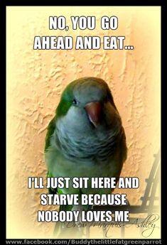 Quaker Parrot Love from Buddy. Funny Birds, Cute Birds, Pretty Birds, Beautiful Birds, Parrot Pet, Parrot Toys, Parrot Bird, Animals And Pets, Funny Animals