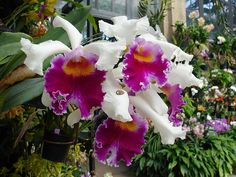 my favorite plant..orchid