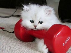 This little feline is into heavy lifting.