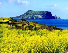 Design your own Jeju island tour! A certified and fluent English/Chinese-speaking guide will show you around the real Jeju Island. Canola Flower, Jeju Island, Small Group Tours, Win A Trip, Island Tour, Day Tours, Nature Photos, Art Pictures, Trip Advisor