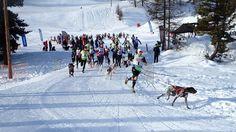 Grand prix neige de canicross blanc - Championnat Fédéral à Arvieux
