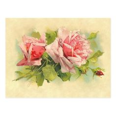 Vintage Catherine Klein Pink Rose Spray Postcard