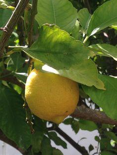 Lemonthree