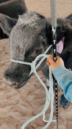 Baby Farm Animals, Baby Cows, Cute Little Animals, Animals And Pets, Cow Pictures, Baby Animals Pictures, Cute Animal Photos, Cute Baby Cow, Cute Cows