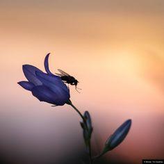© Blende, Tim Quednau, Hände waschen - Zähne putzen - Ab ins Bett! | #Insekt #Fliege #Blume #Blüte #insect #fly #flower #blossom