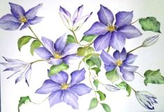 blue and purple clematis | Painted in watercolour.