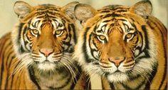 16 Ideas De Animales Exoticos Animales Exóticos Animales Animales Asombrosos