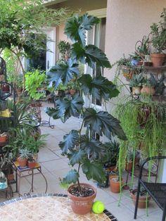 July 2015 Garden Photos - Grant Meyer - Picasa Web Albums