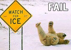 Funny pictures about Polar bears definitely cannot read. Oh, and cool pics about Polar bears definitely cannot read. Also, Polar bears definitely cannot read photos. Funny Animal Quotes, Funny Animal Pictures, Funny Images, Funny Animals, Cute Animals, Funny Photos, Cold Pictures, Stupid Animals, Bing Images