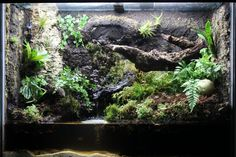 Paludarium for geosesarma crabs. Build log includes hardscaping with eggcrate and great stuff, plumbing using canister filter, and huge plant list with lots of epiphytes and orchid species.