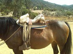 Comfortable Chilean saddles