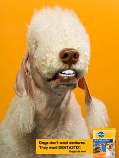 33 best doggie dentures images on pinterest funny animals