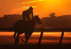 A horse and its rider are seen in silhouette during early morning workouts at Belmont Park in Elmont, New York, June 8, 2012.  (SHANNON STAPLETON/Reuters/Shannon Stapleton)