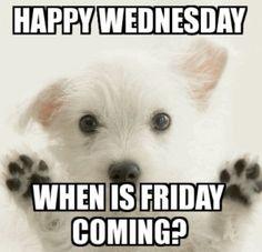 Wednesday Greetings, Wednesday Hump Day, Good Morning Wednesday, Wacky Wednesday, Wonderful Wednesday, Sunday, Funny Wednesday Quotes, Wednesday Humor, Funny Good Morning Quotes