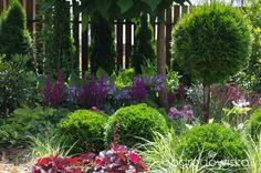 Ogród Anety - strona 71 - Forum ogrodnicze - Ogrodowisko