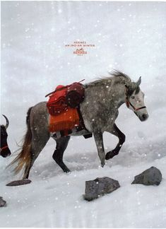 hermes horse ad