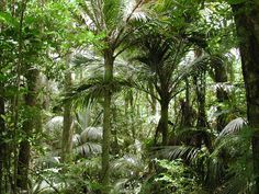 tropical trees - Google Search