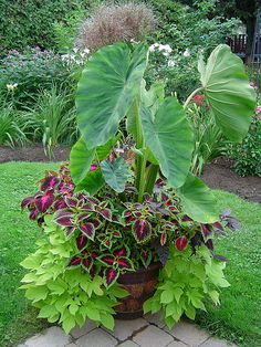 Easy To Grow Houseplants Clean the Air 15 Fabulous Summer Container Garden Flowers Ideas 00013 Flower Garden, Garden Design, Plants, Indoor Gardening Supplies, Gardening Supplies, Planters, Container Gardening, Container Gardening Flowers, Garden Stones