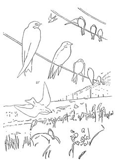 Coloring Page Birds Kids N Fun
