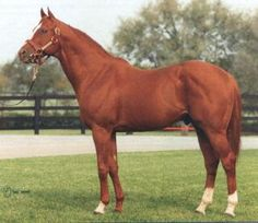 General Assembly (USA) 1976-2005 Ch.h. (Secretariat (USA)-Exclusive Dancer (USA) by Native Dancer (USA) 1st Travers S (USA-G1), Hopeful S (USA-G1) Stood in Ireland, then Germany. Sire of 26 SWS; broodmare sire of 51 SWS.