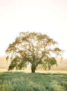 Oh what I would give to spend an entire day reading book after book under this tree!!!