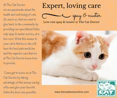 Low cost, Spay & Neuter at The Cat Doctor - best care for less. www.thecatdoctoronline.com