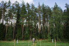Nordic Wedding, Wedding Show, Helsinki, Finland, Getting Married, Countryside, Real Weddings, Plants, Outdoor