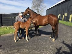 Dame Dorothy & her 2017 Curlin filly