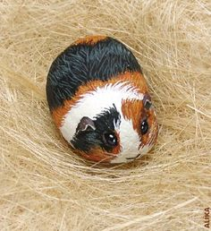 guinea pig ---- have the boy try rock painting as an art project
