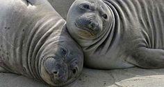 Pour la première fois, des mammifères marins victimes du virus H1N1