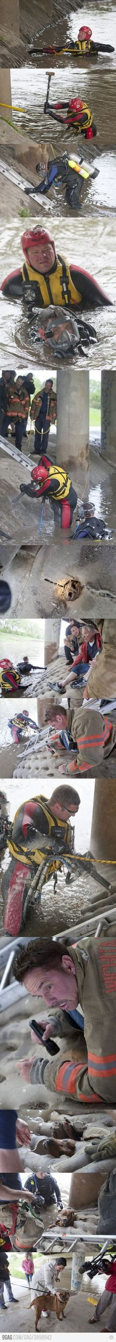 Amazing dog rescue.  http://abcnews.go.com/blogs/headlines/2012/04/kansas-firefighters-rescue-trapped-dog-from-rising-river-waters/
