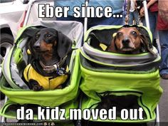 "Eber since...  da kidz moved out... (My grandkids once asked me why I'm THEIR Grandma, but the dachshunds ""Mommy"".  How to explain?)"