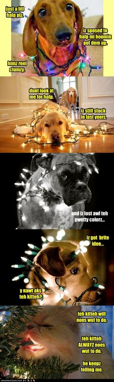 Christmas lights, we have done this to bandit once or twice ;p