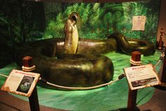 Titanoboa: Monster Snake is now open at the @Delita Florida Museum! #Gainesville #GNVFL