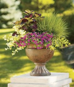 Party of Five, by Proven Winners Container Size: 24 inches, Exposure: Sun  Superbells® Pink calibrachoa Northern Lights tufted hairgrass Gold Mound duranta Lemon Licorice licorice plant ColorBlaze® Kingswood Torch coleus