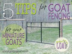 5 Tips for Goat Fencing for Your Miniature Goats                                                                                                                                                                                 More