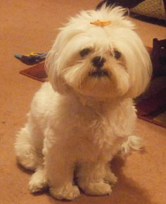 My doggie Annabelle-she's the best!